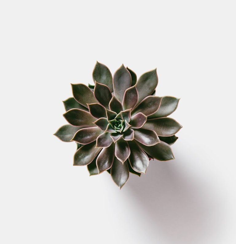 Realistic Plant